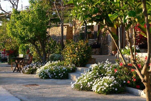 Gartensicht zum Haus