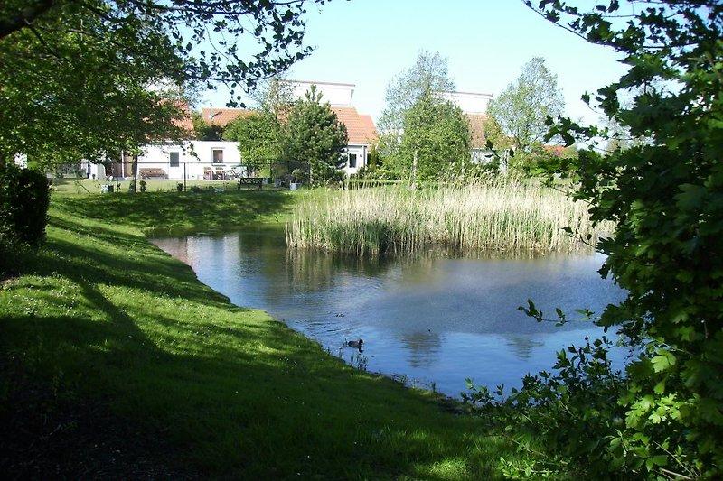 Teichanlage am Gartenende