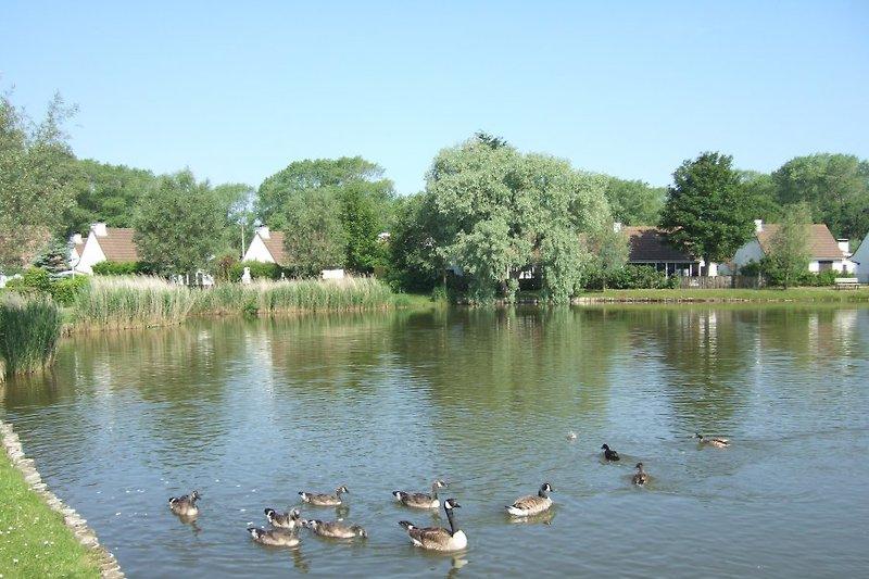 Blick vom Vorgarten auf den See