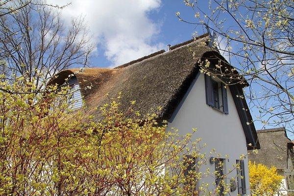 Reethaus auf der Insel Poel à Am Schwarzen Busch - Image 1