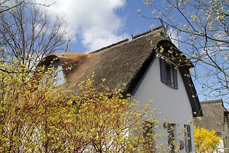 Thatched Cottage on the island of Poel