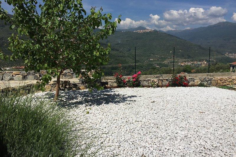 Ficofiore Weiß in Chiusanico - Bild 2