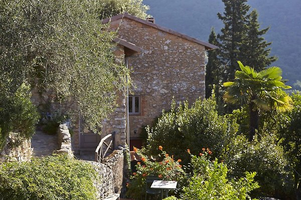 Casa Pipistrelli Terrasse Wohnung in Camaiore - Bild 1