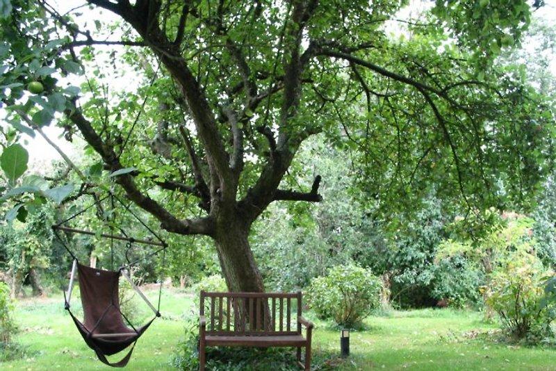 Der Apfel-Traum-Baum