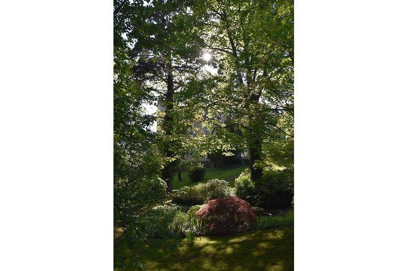 Parkanlage / Garten