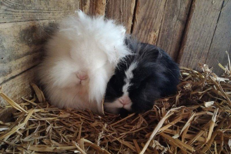 Unsere Kaninchen Trudi und Rudi