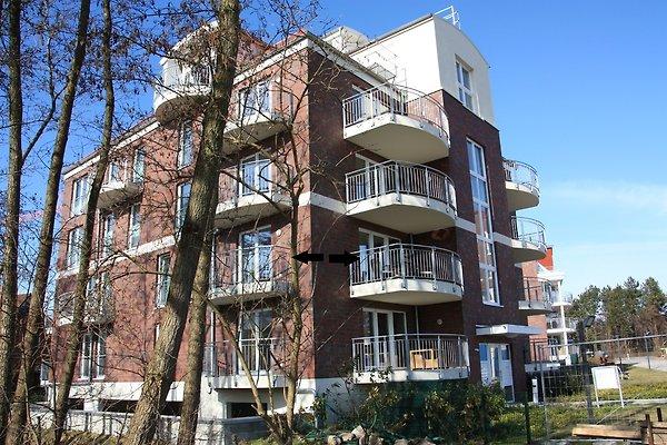 Die schwarzen Pfeile markieren die beiden Balkone der Wohnung