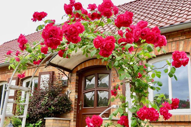 Von alten Rosen umrankt