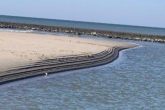 Strandslag 89 gemütlicher Seestern