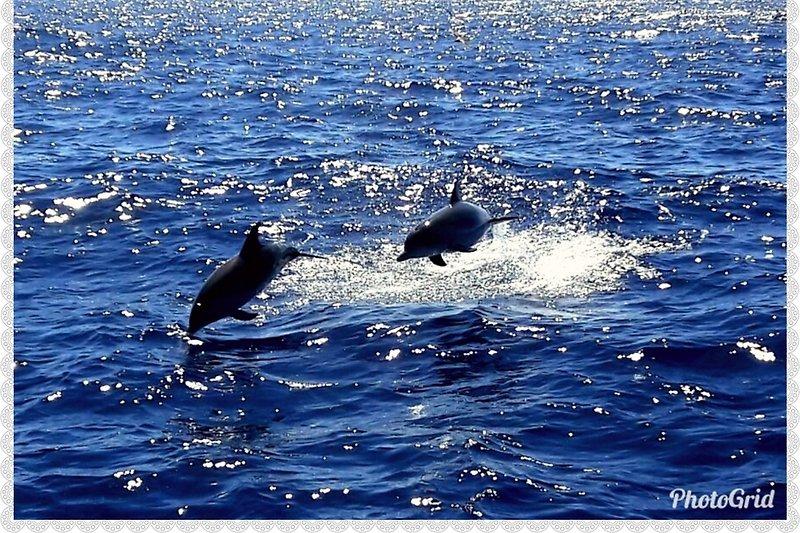 Delphine beim Angelausflug