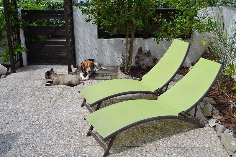 Sonnenbad fürZwei- oder Vierbeiner
