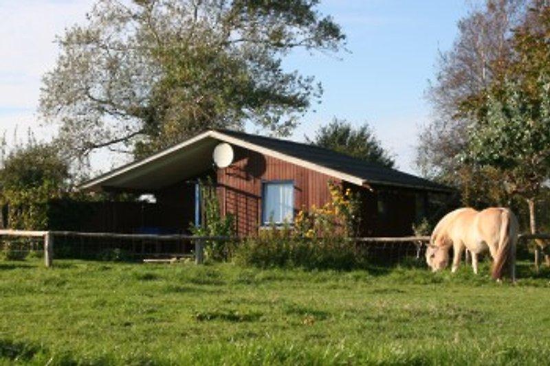 Ferienhaus auf dem Bauernhof en Bergenhusen - imágen 2