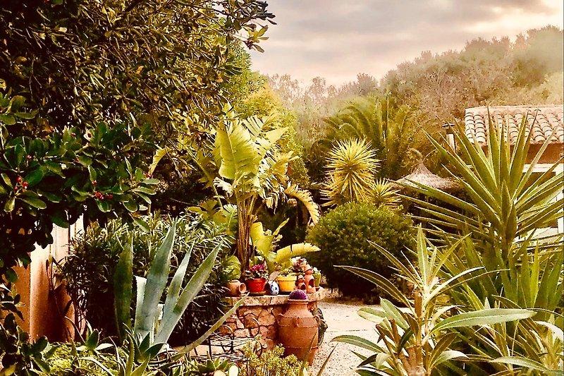 Unser alteingewachsener Garten