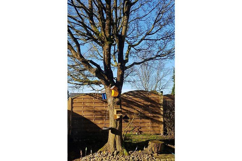 der Futterbaum