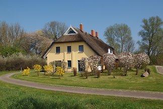 sonniges Reetdachhaus Malve 1