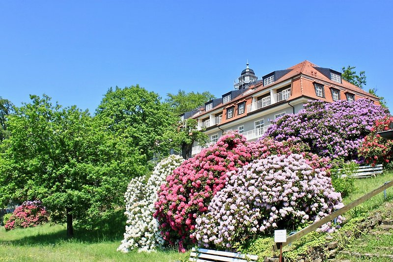 Das Haus König Albert im Königspark Dresden. Früher ein Sanatorium m it einzigartigem Fernblick. Heute Ihre Ferienwohnun