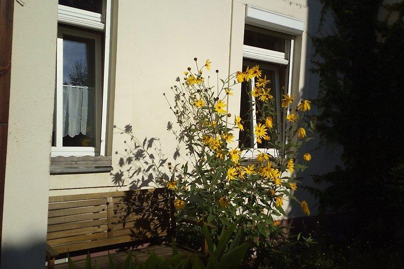 Schlafzimmerfenster zum Hofgarten