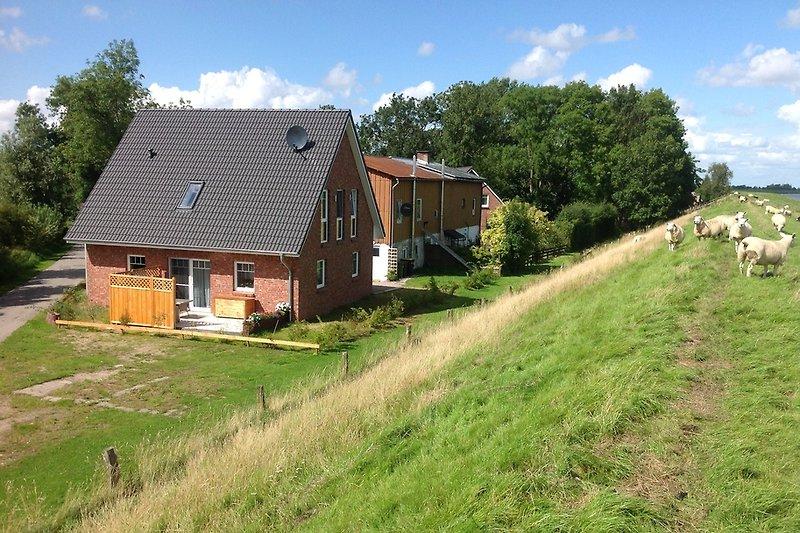 Ferienhaus und Deich in Nordfriesland auf Eiderstedt