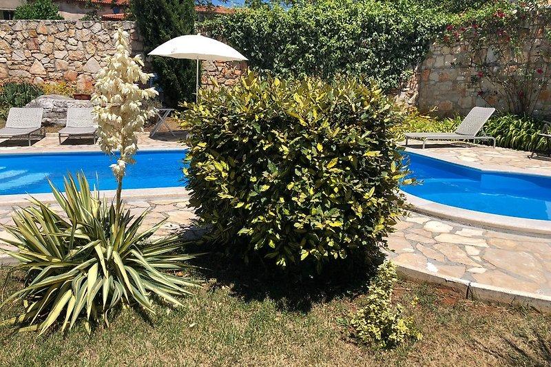 pool in the Mediterranean Garden
