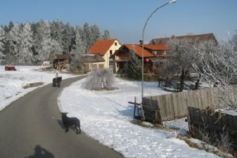 Bayerhof im Winter