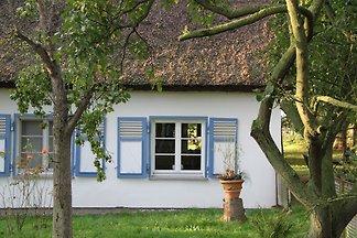 Inis Kate Ostkoje Ferienhaus Usedom