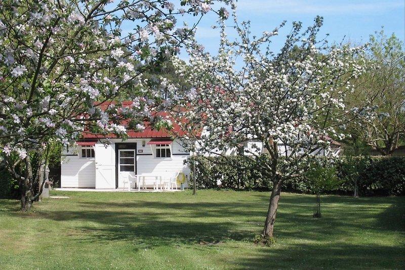 Maison Camélia im Frühjahr