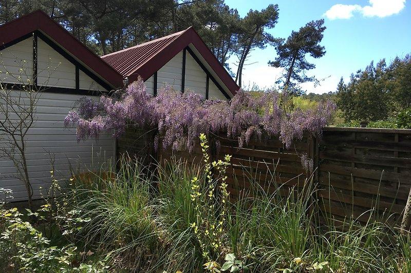 Maison Mimosa im Frühjahr