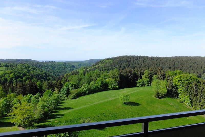 Blick vom Balkon im Sommer