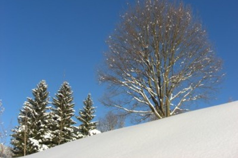 Winteridylle mit Panoramablick