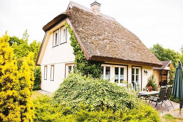 Ferienhaus Ziemann in Wieck in Wieck - Bild 1
