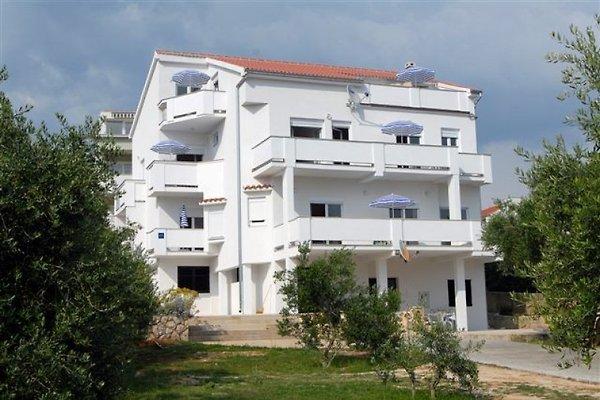 Apartements in Novalja in Novalja - Bild 1