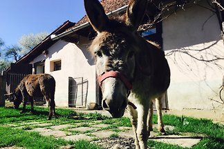 The Donkey Farm