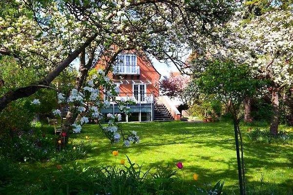 Haus Meerkultur-Gartenwohnung en Warnemünde - imágen 1