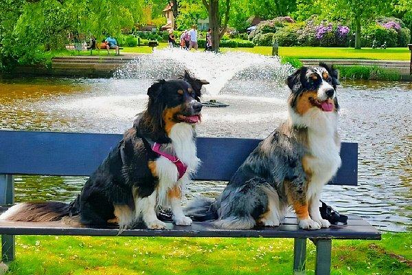 Ferienhaus Arnolde Urlaub mit Hund in Timmel - Bild 1
