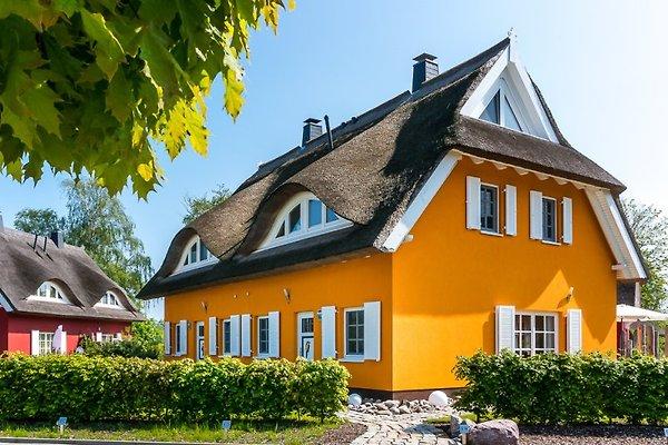 Haus Reethaus Prerowstrom in Prerow - Bild 1