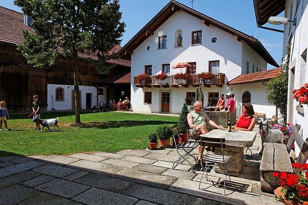 Bauernhof Gründinger en Büchlberg - imágen 1