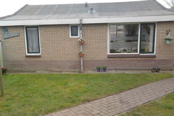 Ridderspoor à Hollum - Image 1
