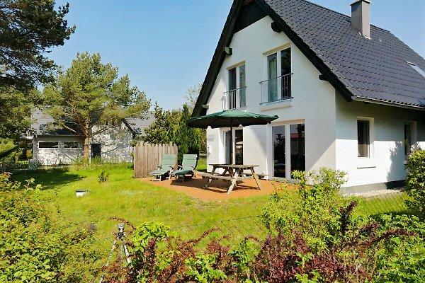 Haus Wasserblick - Seeadler  in Quilitz - Bild 1