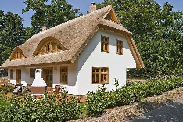 Ferienhaus bernsteinsucher ferienhaus in sellin mieten for Sellin ferienhaus
