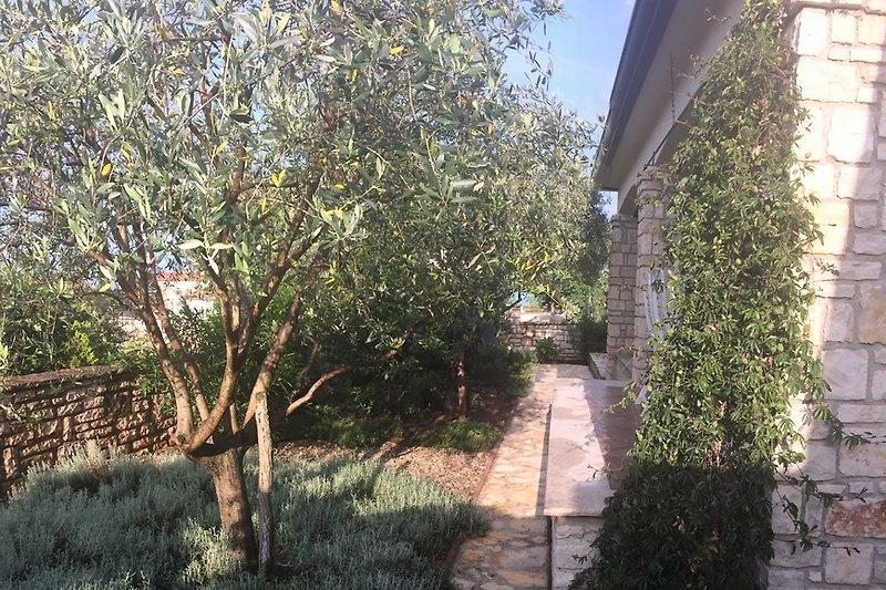 Garten mit Natursteinmauer, Oliven und Kräutern