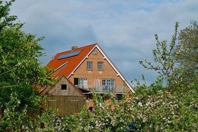 Obsthof Schröder Altes Land à Elbinsel Krautsand - Image 2