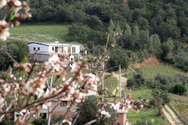 Unsere ruhigen gemütliches Haus in der immergrünen mediterranen Macchia gelegen.