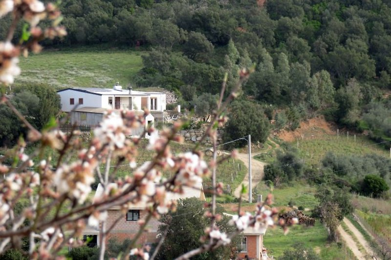Our peaceful cozy house lain in the evergreen Mediterranean Maquis.