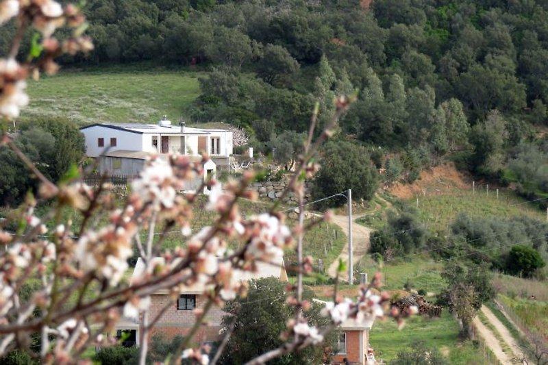 Notre maison paisible et confortable couché dans le maquis méditerranéen à feuil