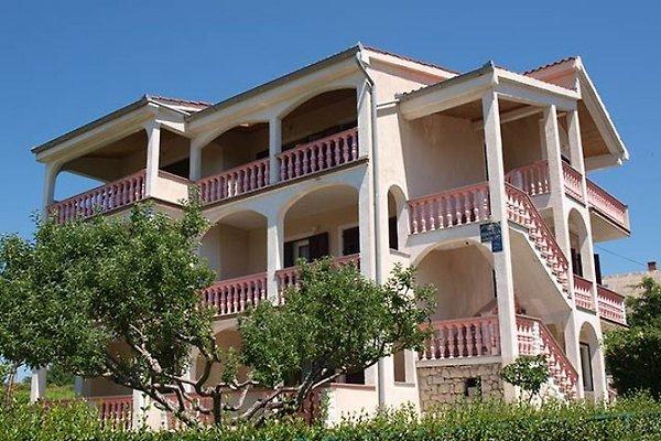 Drakulic appartements, Lopar  à Lopar - Image 1