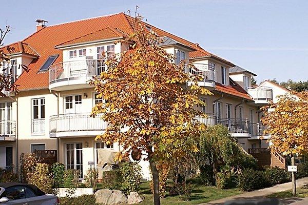 Dwarsloeper à Boltenhagen - Image 1