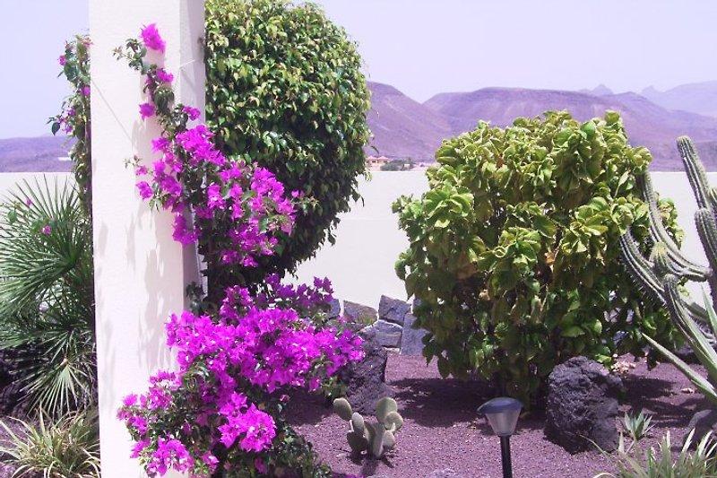 Garten Casa Sebastian