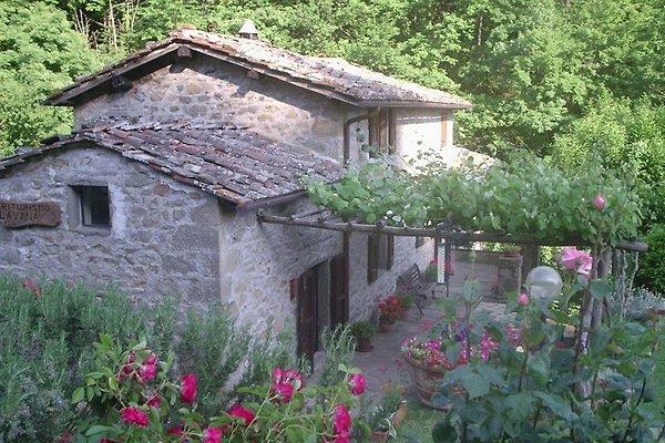 FARM LAVANA à Reggello - Image 1