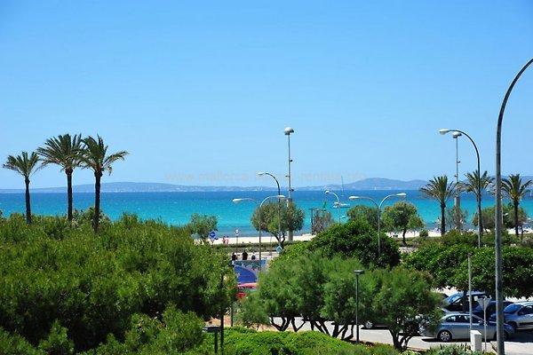 Wohnung Mieten Mallorca El Arenal