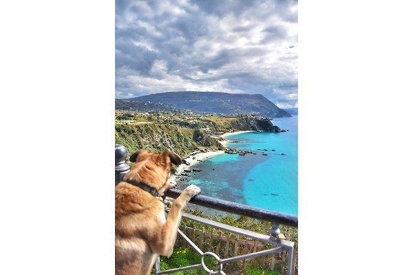 Pas cher Pet Italie à Tropea - Image 1